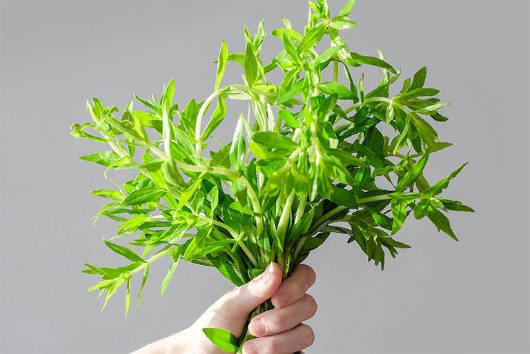 Bài thuốc từ rau ngổ có tác dụng giảm đau nhức xương khớp hiệu quả