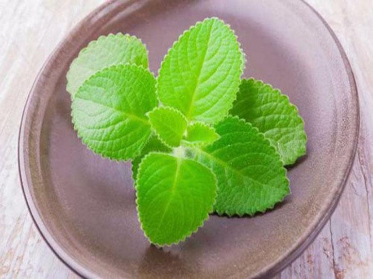 Lá cây húng chanh có tác dụng tích cực trong điều trị bệnh viêm mũi dị ứng mãn tính