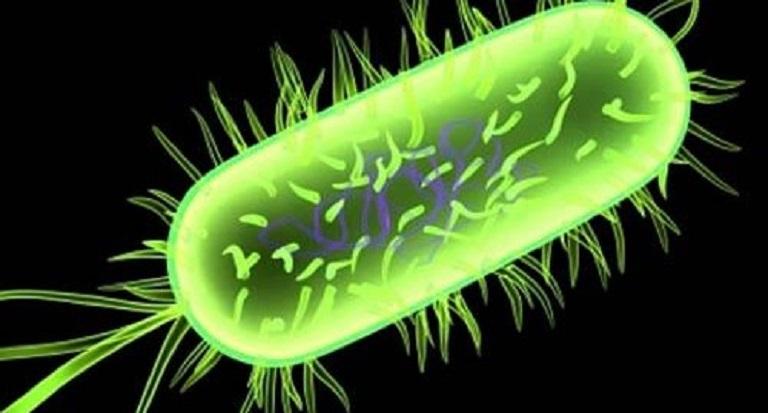 Vi khuẩn là nguyên nhân chính dẫn đến viêm âm đạo