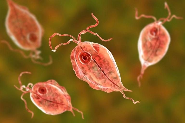 Vi khuẩn trùng roi gây viêm nhiễm âm đạo