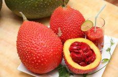 Trong hạt gấc có chứa nhiều thành phần hiếm rất tốt cho sức khỏe, đặc biệt là người bị viêm mũi dị ứng
