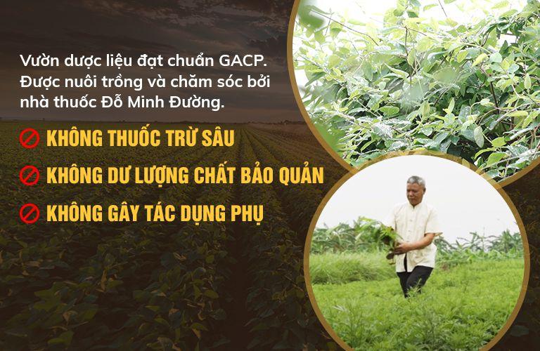 Vườn dược liệu chuẩn sạch của nhà thuốc được trồng và canh tác theo phương pháp hoàn toàn hữu cơ