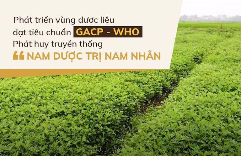 Vườn dược liệu nhà thuốc Đỗ Minh Đường